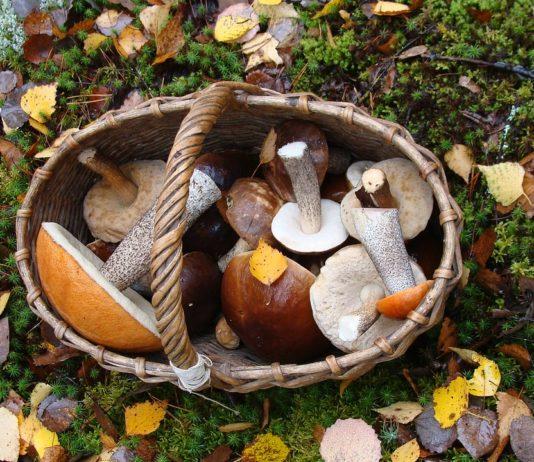 s'équiper pour cueillir des champignons
