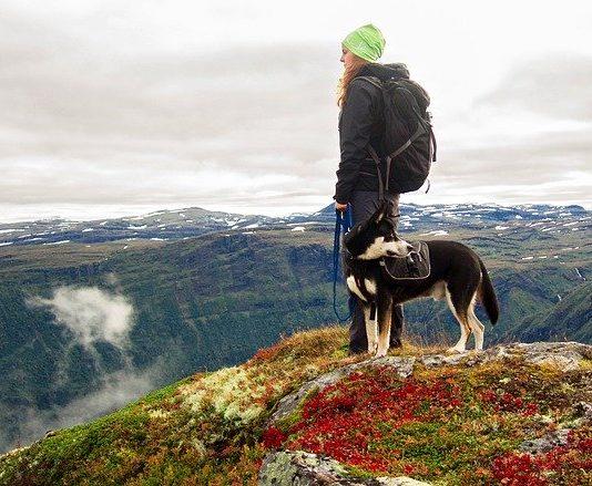 chien en randonnée